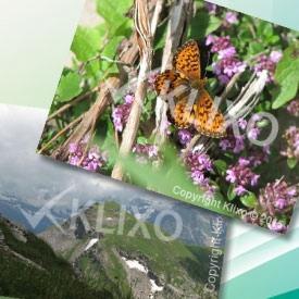 ایجاد واتر مارک و کپی رایت روی تمامی تصاویر سایت با KLIXO WATERMARK